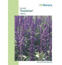 Benary Ziersalbei Evolution®, einjährig