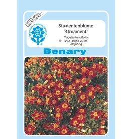 Benary Studentenblume Ornament®, einjährig