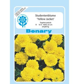 Benary Studentenblume Yellow Jacket, einjährig
