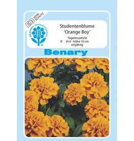 Benary Studentenblume Orange Boy, einjährig