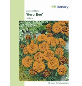 Benary Studentenblume Hero Bee, einjährig