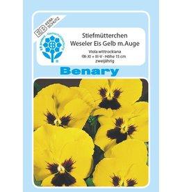 Benary Stiefmütterchen Weseler Eis® Gelb mit Auge, zweijährig