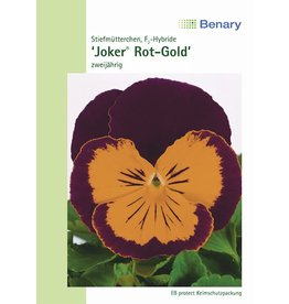 Benary Stiefmütterchen Joker® F2 Rot-Gold, zweijährig
