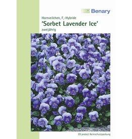 Benary Hornveilchen Sorbet F1 Lavender Ice, zweijährig