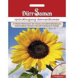 Dürr Samen Gründüngung  Sonnenblumen 1 kg