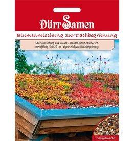Dürr Samen Blumenmischung zur Dachbegrünung