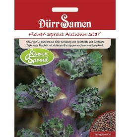 Dürr Samen Flower-Sprouts Autumn Star®