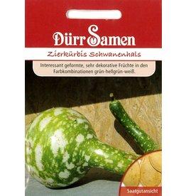 Dürr Samen Zierkürbis  Schwanenhals