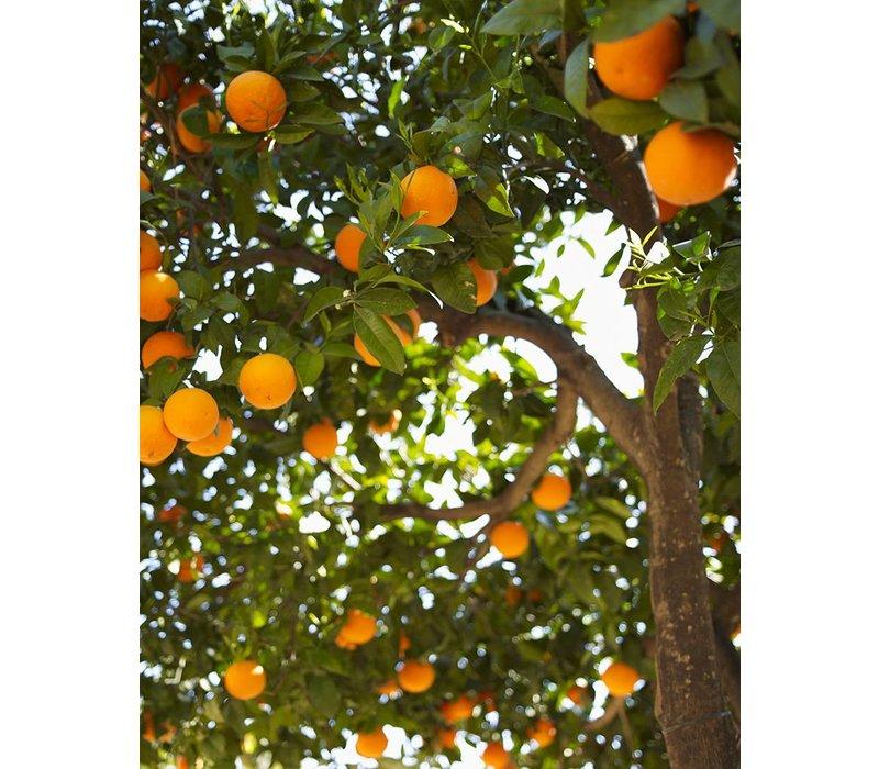 Hand Soap Orange & Jasmine