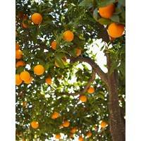 All Purpose Cleaner Orange & Jasmine