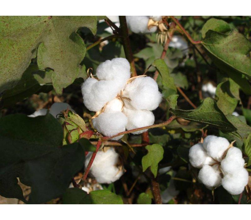 Lessive Vanille & Coton (1000ml)