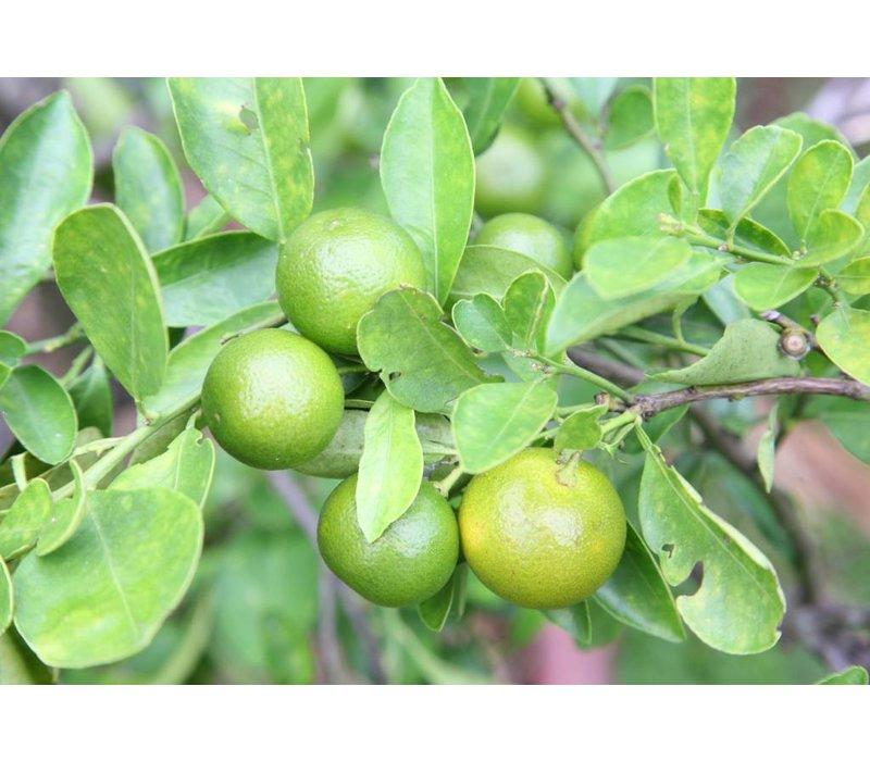 Dishwash Tablets Grapefruit & Lime