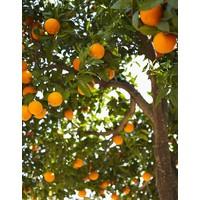 Recharge de Savon à Main Orange et Jasmin (1000 ml)