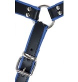 RoB H-Front Harness with blue Piping