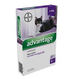 Bayer Advantage Kat 80 vanaf 4kg - 4 pipetten