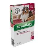 Bayer Advantage 250 voor honden tussen 10kg en 25kg - tegen vlooien en luizen