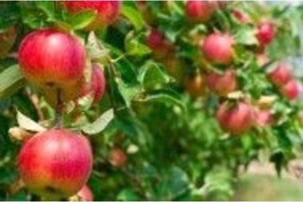 Sier-, fruit- en overige bomen