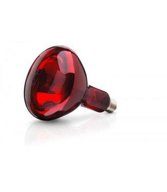 Lamp 250W rood Philips