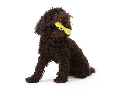 Onverslijtbaar Kauwbot voor Hond in diverse Maten & Kleuren