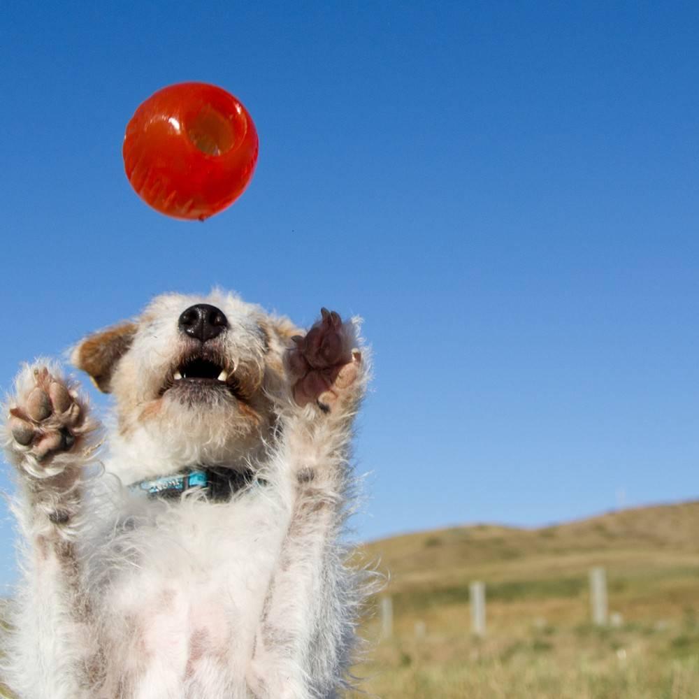 Onverwoestbare Stuiter Bal voor Sterke Honden