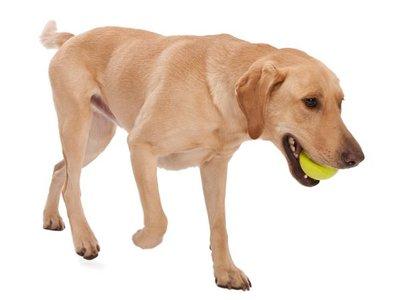 Drijvende & Stuiterende Hondenbal voor Werpstok