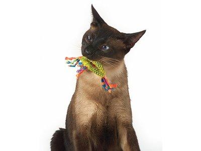 Gebitsreiniging voor Katten met Kattenkruid