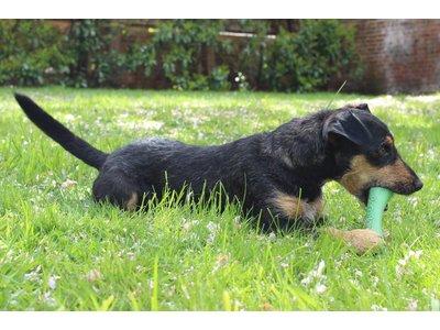 Flexibel Kauwbot van Rubber voor Hond