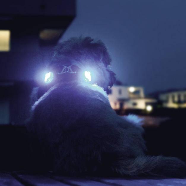 Luumi Honden Veiligheidslampje met LED