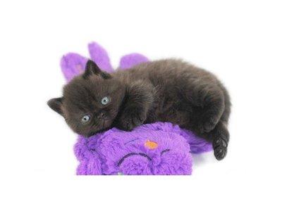 Purr Pillow Knuffelkussen voor Katten