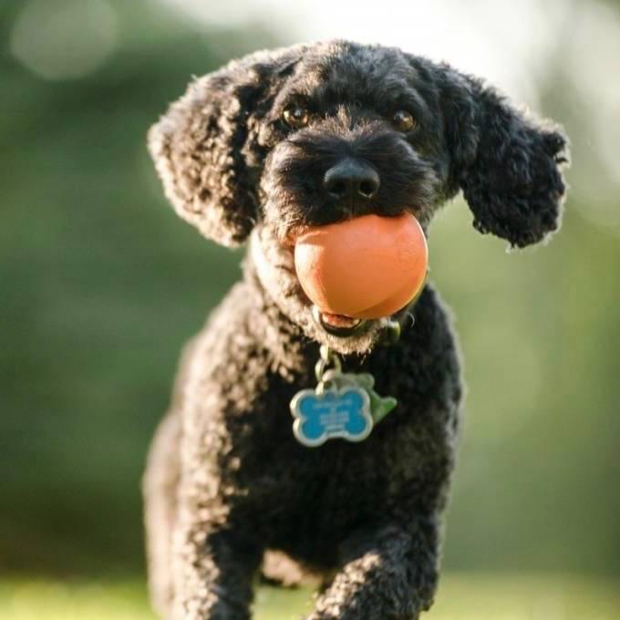 Sterke Bal voor Werpstok Hond Stuiterend