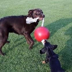 Sterke Honden Bal met Touw
