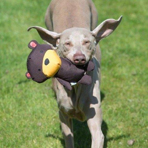 Pluche Knuffelbeer voor je Hond