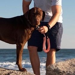 K9 Jogginglijn voor Hond