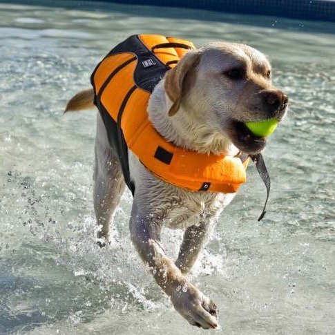 Zwemvest voor Honden Ripstop