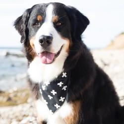 Honden Bandana in Zwart/ Groen