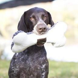 Honden Speelbot van Pluche met Pieper
