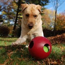 Speelbal voor Hond Bijtbestendig
