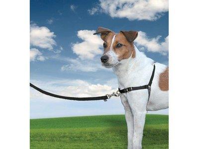 Easy Walk Anti Trek Tuig, De Riem en Harnas voor Trekkende Hond