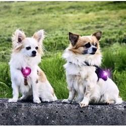 Orbiloc Dual Veiligheidslampje voor Kleine Honden