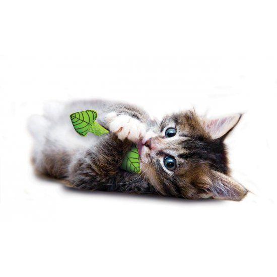 Gebitsverzorgend Speeltje voor Katten