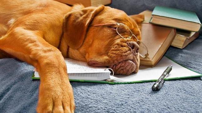 6 | Magazine | 10 redenen om naar een puppycursus te gaan! | Lees bericht