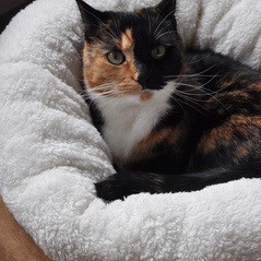 Kattenmand Donut van Lamswol