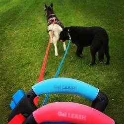 Oprolbare Flexi Hondenriem met Gel Handvat