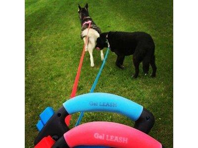 Wigzi Oprolbare Hondenriem met Gel Handvat