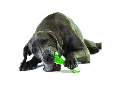 Petstages Honden Tandenborstel Speelgoed