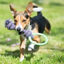 Touw voor Pups met Bijtring