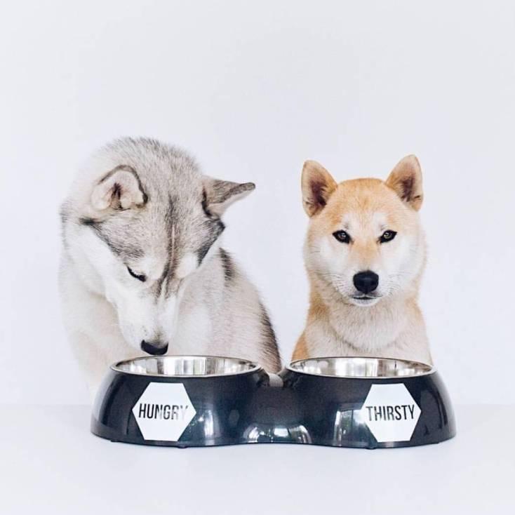 Dubbele Voerbak voor Honden in 3 kleuren