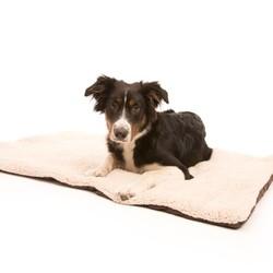Opvouwbare Reisdeken voor Honden