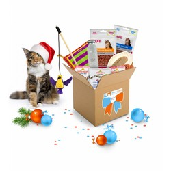 December GiftBox voor Katten Medium