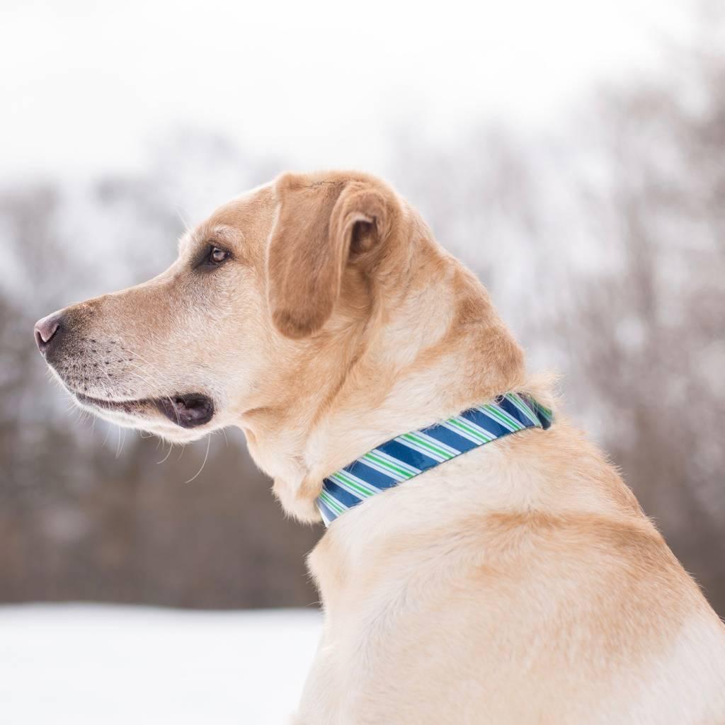 Hondenhalsband Prepster Stripe Blauw